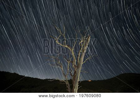 Old tree with the night sky full of star trails