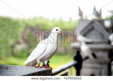 white seagull and freedom bird at park