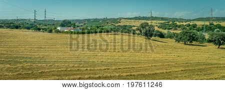 Grass Meadow On The Spanish Countryside Of Cordoba, Spain,europe
