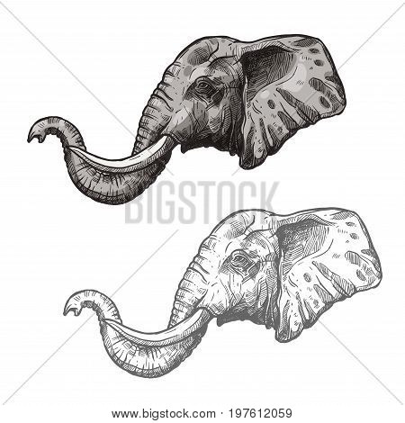 Elephant head or muzzle sketch icon. Vector isolated African or Indian wild mammal animal for zoology, mascot blazon of sport team, wildlife savanna nature adventure scout club or tattoo