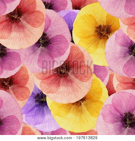 Poppy. Texture of flowers. Seamless pattern for continuous replicate. Floral background photo collage