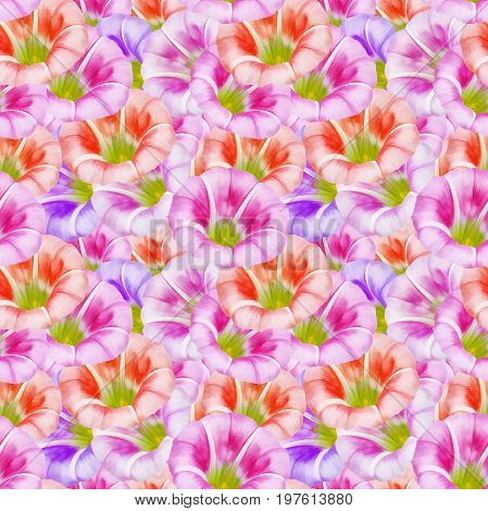 larger bindweed. Texture of flowers. Seamless pattern for continuous replicate. Floral background photo collage