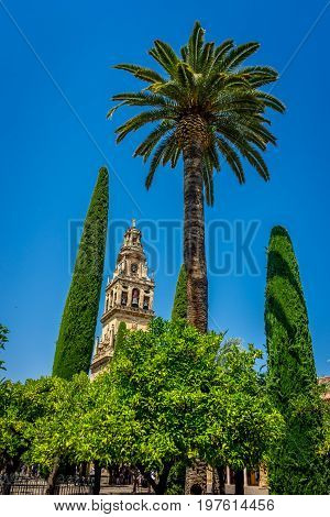A Tall Palm Tree With The Bell Tower In The Background On A Bright Sunny Day With Blue Sky In The Co