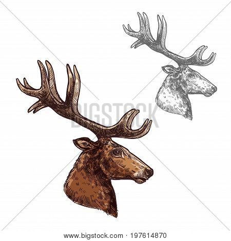 Deer or reindeer head and antlers sketch vector icon. Wild forest stag deer isolated wildlife fauna and zoology symbol or emblem for blazon for hunting sport team trophy, nature adventure club
