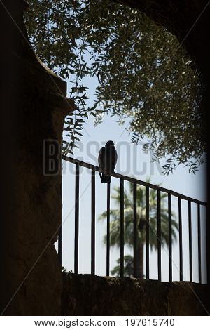 A Pigeon Resting On A Grill In Cordoba, Spain, Europe