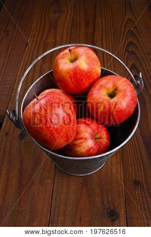 High angle shot of a glavanized pail full of fresh picked Gala apples on a dark wood rustic surface.