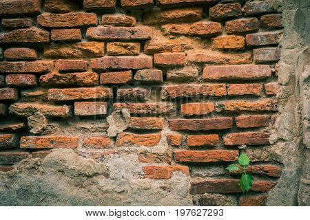 The old brick wall has deteriorated for use as a background image.