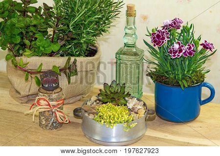 Indoor Decoration With Several Flowers And Herbs.