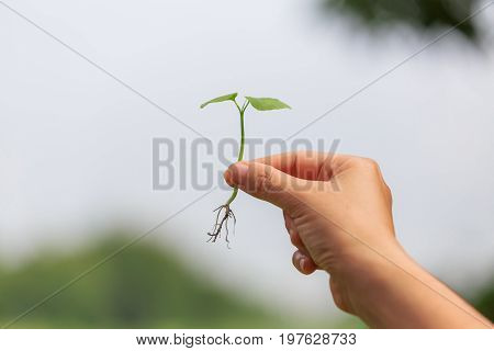 Hand catching holding a sprout or seedling concept of growth and prosperity.