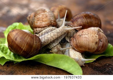 Snails in the garden on the wooden background. The snail stuck out its antennae