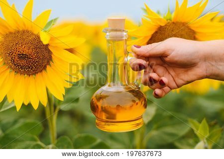 Sunflower Oil In Glass Bottle  With Sunflower Field On The Background. Sunflower Field With Blue Sky