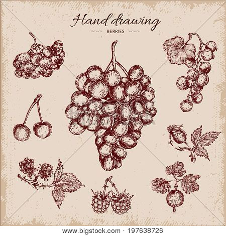 Berries hand drawn design including grapes rowanberry black currant and cherry on beige worn background vector illustration