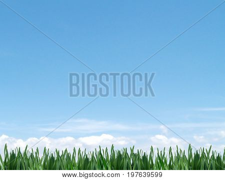 closeup green grass meadow with blue sky and cloud, non urban scenery beautiful and refreshing, nature landscape background