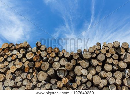 Many sawed pine logs stacked in a pile under cloudy sky. Front view close-up.