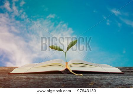 Open book with growing tree with blurry blue cloudy sky background for knowledge and learning concept.selective focus.