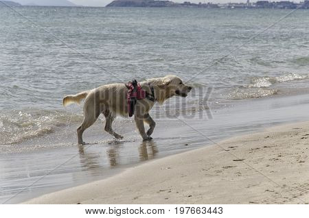 View of dog coming out of the water