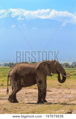 Lonely elephant in the savanna. Kenya. Africa