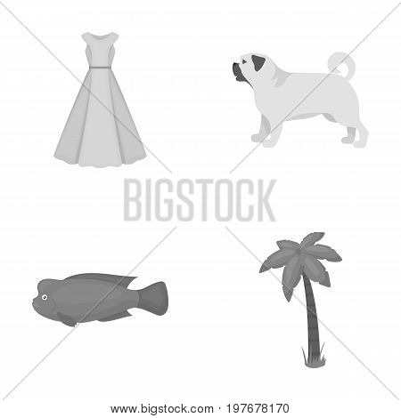 leisure, hobbies, textiles and other  icon in monochrome style., plant, celebration, tourism icons in set collection