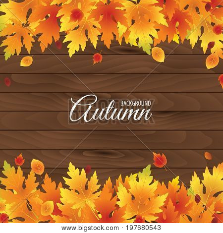 Falling leaf background vector. Autumn colorful leaves on wooden background.