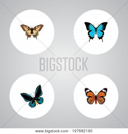 Realistic Papilio Ulysses, Tiger Swallowtail, Monarch And Other Vector Elements