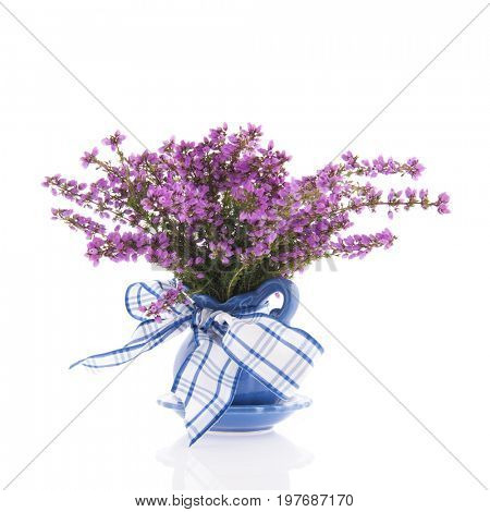 Purple heath flowers in blue vase isolated over white background