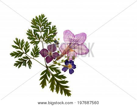 Beautiful isolated floral pressed flower decration natural colorful empty background with dry plants