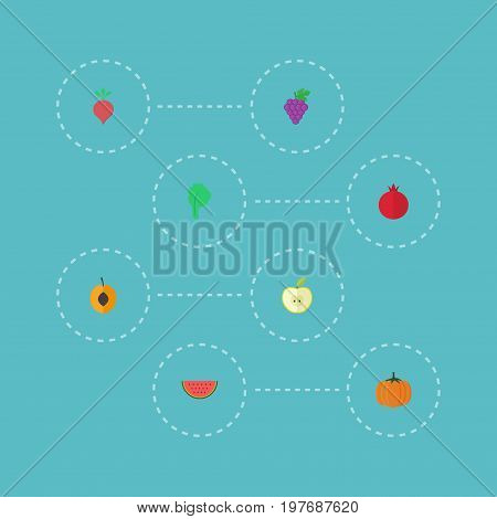 Flat Icons Gourd, Jonagold, Lettuce And Other Vector Elements
