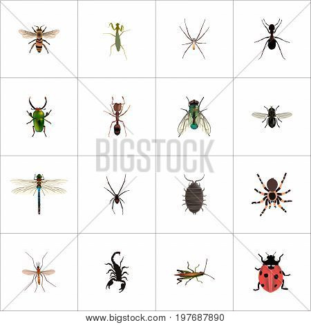Realistic Spinner, Wasp, Ant And Other Vector Elements