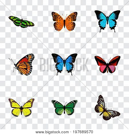 Realistic Danaus Plexippus, Birdwing, Archippus And Other Vector Elements
