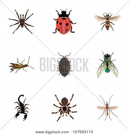 Realistic Dor, Wasp, Tarantula And Other Vector Elements