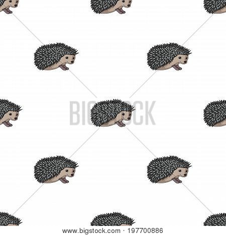 Hedgehog.Animals single icon in cartoon style vector symbol stock illustration .