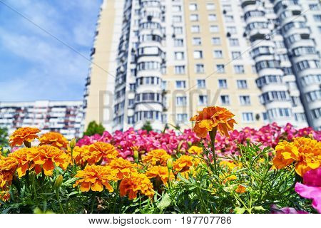 Urban flowers with high dwelling building on the blurred background
