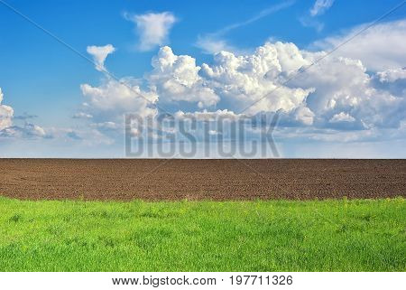Cultivated green field. Rural scene. Farmland scene