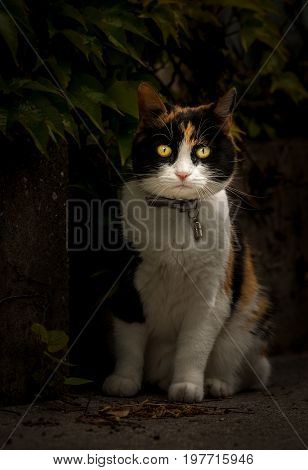 Portrait of a domestic cat looking straight out