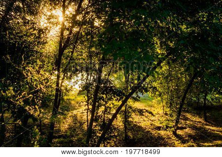 Summer Landscape On The Banks Of The Green River At Sunrise, Russia, Rostov Region, Don