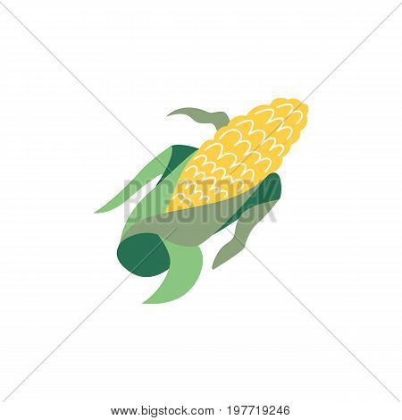 Vector corn flat illustration isolated on a white background. Cartoon cereal, cob . Sign of thanksgiving, autumn, harvest and agriculture. Vegetarian food, healthy and natural eating.