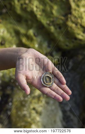 Boy Hand Holding Seashell 2