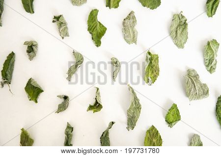 Dry green leaves of mint and melissa on white background. Close up top view.