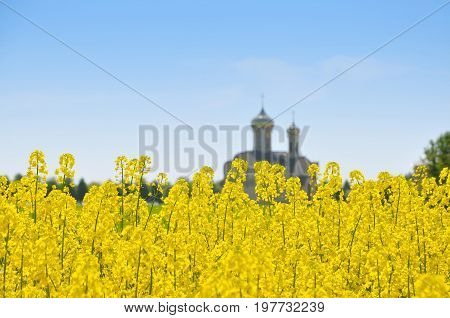 Yellow flowering rapeseed field and domes of the Orthodox Church in the blurred background.