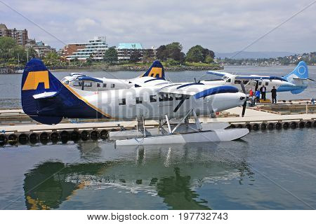 Seaplanes moored in Victoria harbour on Vancouver Island