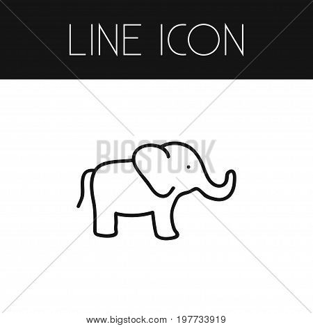 Elephant Vector Element Can Be Used For Elephant, Trunked, Proboscis Design Concept.  Isolated Proboscis Outline.