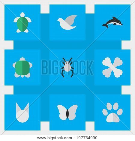 Elements Turtle, Tortoise, Pigeon And Other Synonyms Widow, Spider And Insect.  Vector Illustration Set Of Simple Zoo Icons.