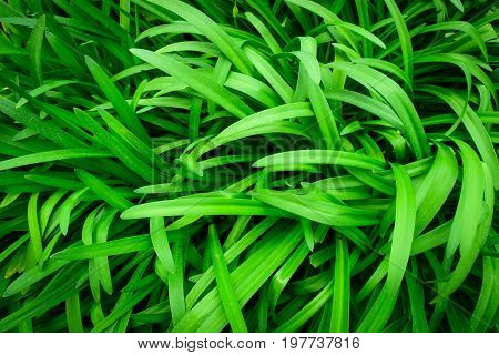 Green leaf or leaves for background texture.