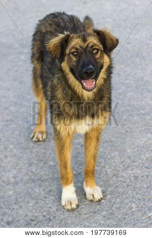 Dog On Asphalt In Summer