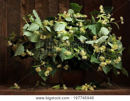 Flowering branches of lime in the jug. A folk remedy for the common cold. Linden flowers.