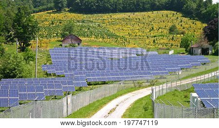 a dirt road leading into a solar farm, a field of yellow flowers in the background