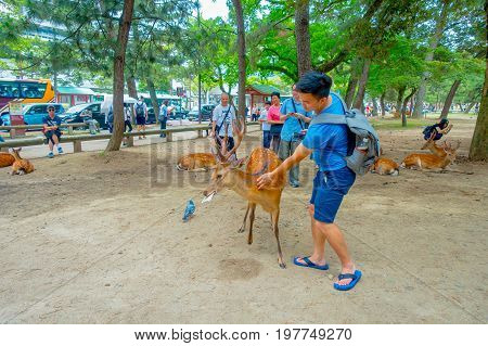 Nara, Japan - July 26, 2017: Visitors feed wild deer in Nara, Japan. Nara is a major tourism destination in Japan - former capita city and currently UNESCO World Heritage Site.
