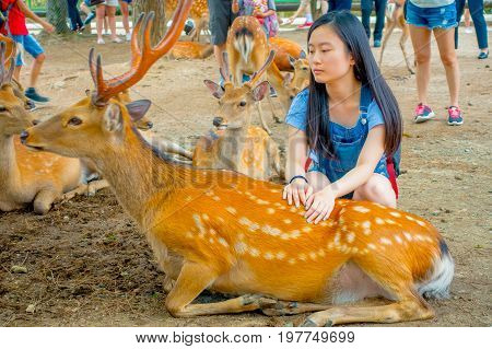 Nara, Japan - July 26, 2017: Young woman touching a beautiful wild deer in Nara, Japan. Nara is a major tourism destination in Japan - former capita city and currently UNESCO World Heritage Site.