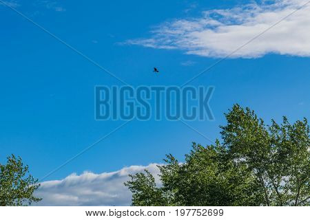 The Seagull Soars In The Blue Summer Sky