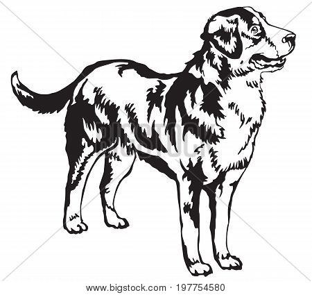 Decorative portrait of standing in profile Greater Swiss Mountain Dog vector isolated illustration in black color on white background